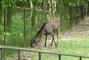 foto ze Zoo Brno. moc pěkná Zoo