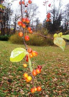 FOTKA - podzim, .