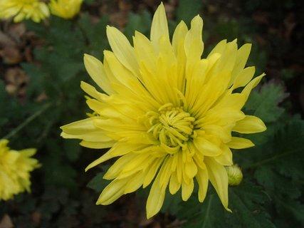 FOTKA - jeden žltý