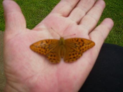 FOTKA - motýl na dlani