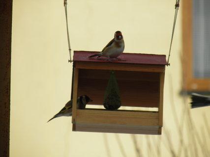 FOTKA - Ptáci v budce 1