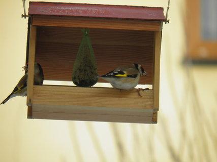 FOTKA - Ptáci v zimě 2