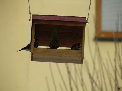 FOTKA - Ptáci v zimě 3