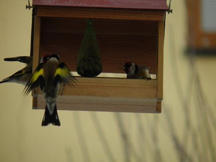 FOTKA - Ptáci v zimě 4