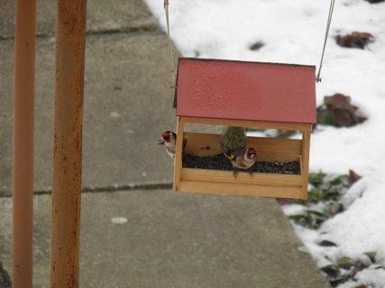 FOTKA - Ptáci v zimě 5