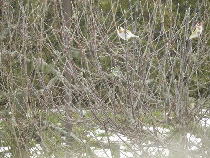 FOTKA - Ptáci v zimě 8