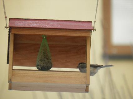 FOTKA - Ptáci v zimě 10