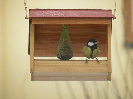 FOTKA - Ptáci v zimě 11