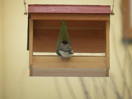 FOTKA - Ptáci v zimě 12