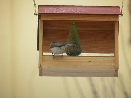 FOTKA - Ptáci v zimě 13