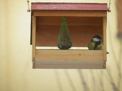 FOTKA - Ptáci v zimě 17
