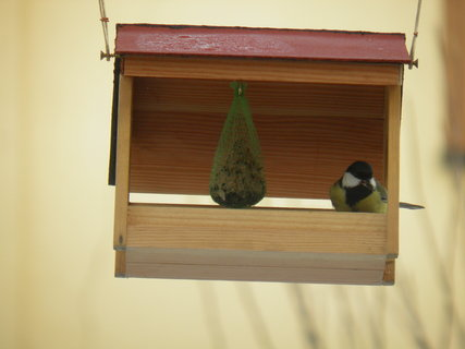 FOTKA - Ptáci v zimě 20