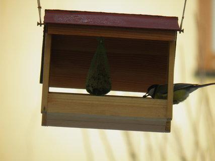 FOTKA - Ptáci v zimě 22