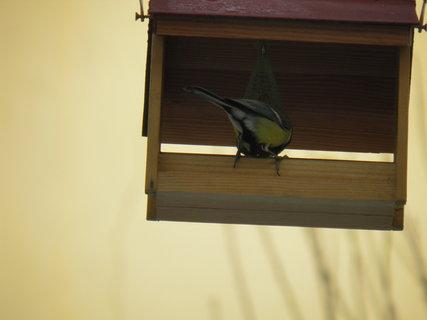 FOTKA - Ptáci v zimě 23