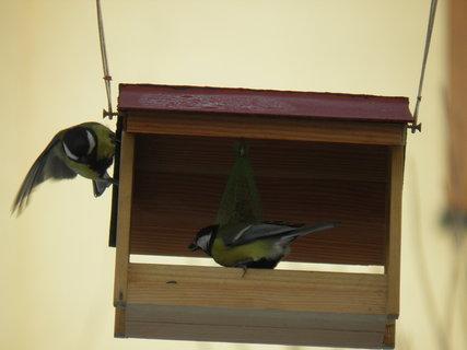 FOTKA - Pt�ci v zim� 26