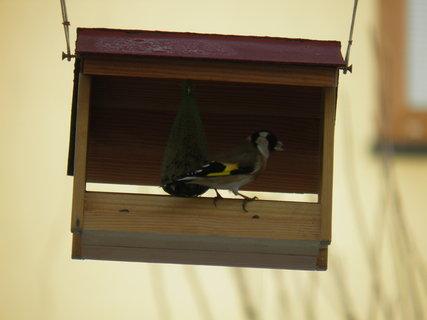 FOTKA - Ptáci v zimě 28