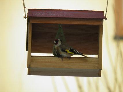 FOTKA - Pt�ci v zim� 29