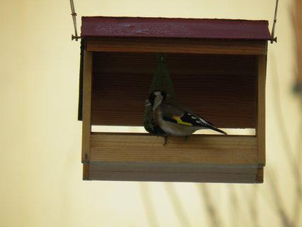 FOTKA - Ptáci v zimě 30