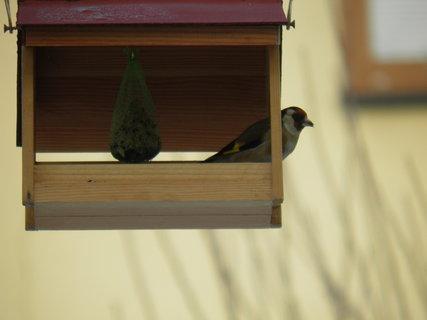 FOTKA - Ptáci v zimě 31