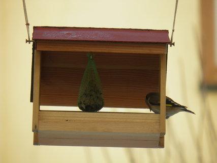 FOTKA - Ptáci v zimě 32