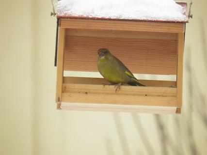 FOTKA - Ptáci v zimě 33