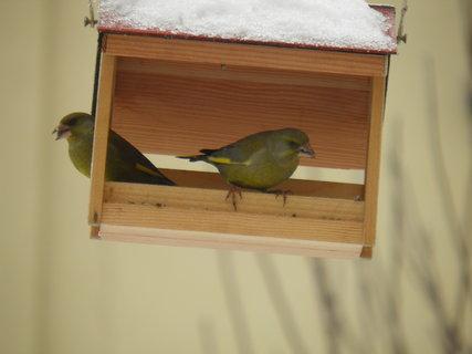 FOTKA - Ptáci v zimě 35