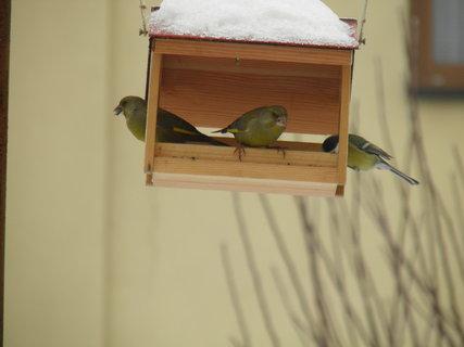 FOTKA - Ptáci v zimě 36
