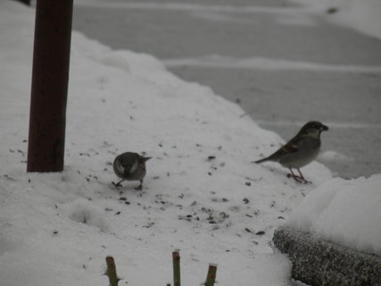 FOTKA - Pt�ci v zim� 37