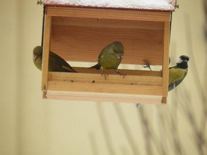 FOTKA - Ptáci v zimě 39
