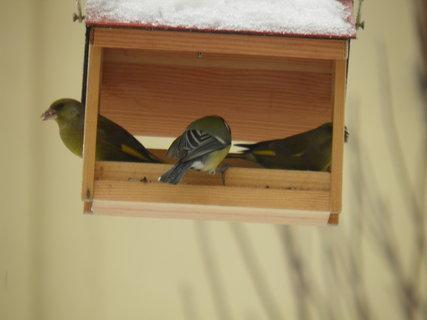 FOTKA - Ptáci v zimě 40