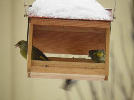 FOTKA - Ptáci v zimě 41