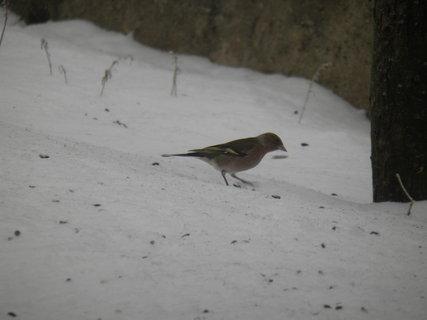 FOTKA - Ptáci v zimě 43