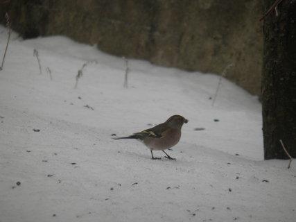 FOTKA - Ptáci v zimě 44