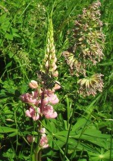 FOTKA - kytky v trávě 2