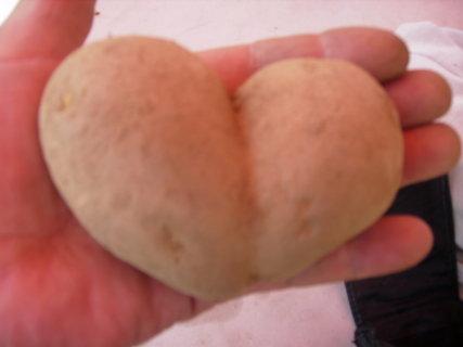 FOTKA - srdce na dlani