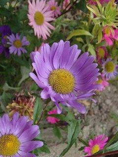 FOTKA - kvitnú aj v novembri