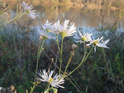 FOTKA - drobné kvietky pri rieke