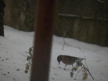 FOTKA - Pt�ci v zim� 45