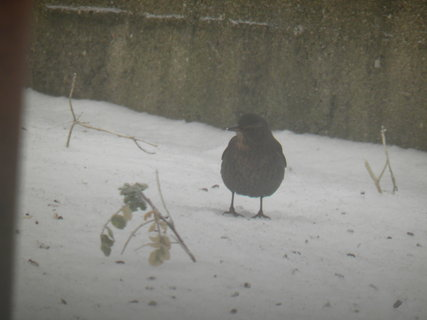 FOTKA - Pt�ci v zim� 47