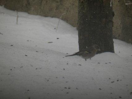 FOTKA - Pt�ci v zim� 49