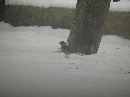 FOTKA - Ptáci v zimě 50