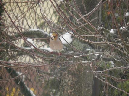 FOTKA - Ptáci v zimě 51