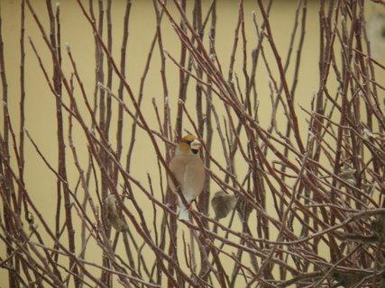 FOTKA - Pt�ci v zim� 54