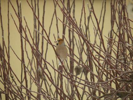 FOTKA - Ptáci v zimě 55