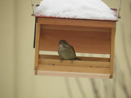 FOTKA - Ptáci v zimě 57