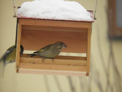 FOTKA - Ptáci v zimě 58