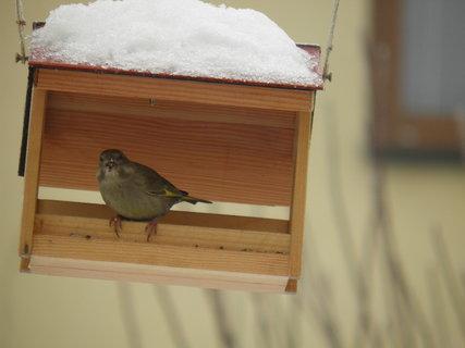 FOTKA - Ptáci v zimě 60