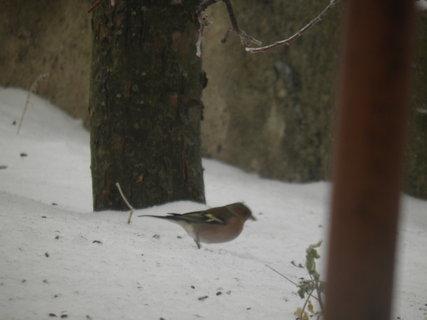 FOTKA - Ptáci v zimě 61