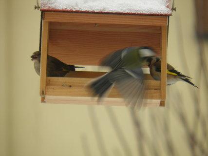 FOTKA - Ptáci v zimě 62