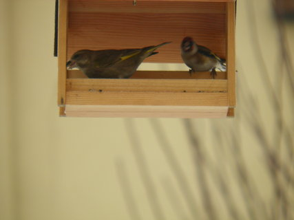 FOTKA - Ptáci v zimě 63